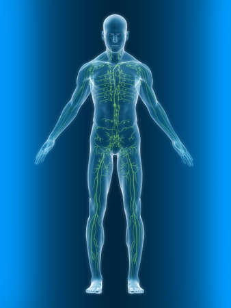 lymph: transparent body with healthy lymphatic system
