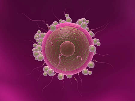 human egg cell - close up Stock Photo - 6530648