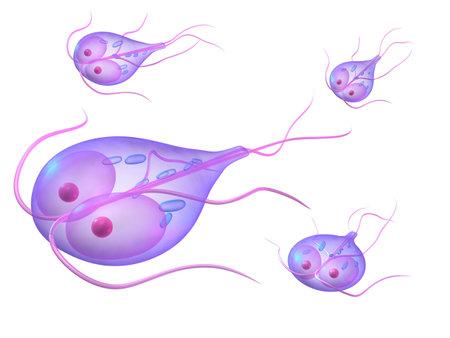 giardia: giardia parasite Stock Photo