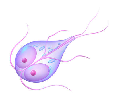 giardia parasite Stock Photo - 6588736