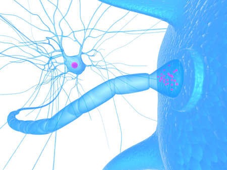 nerve cell and receptor - close up