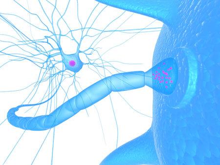zenuw cel en receptor - dichten