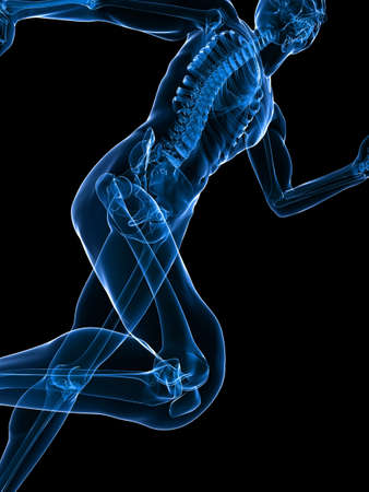 skelett mensch: Transparente jogger Lizenzfreie Bilder