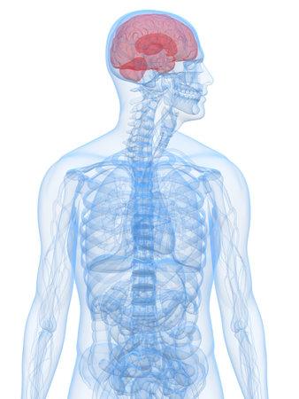 human higlighted brain photo