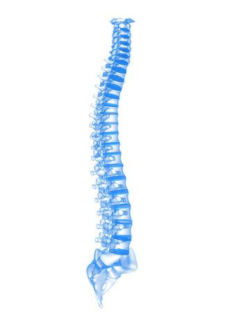 spina dorsale: colonna vertebrale umana Archivio Fotografico