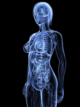 transparent female anatomy Stock Photo - 7308789
