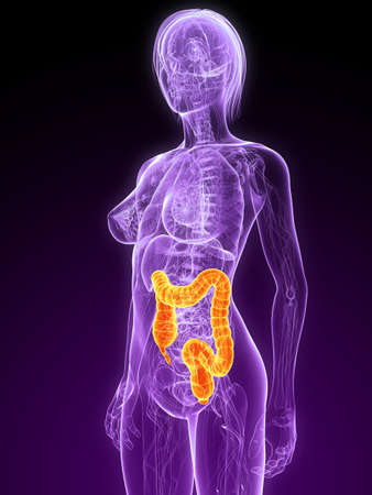 colon cancer: female anatomy with highlighted colon