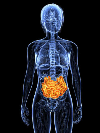 intestino: cuerpo femenino transparente con destac� peque�as