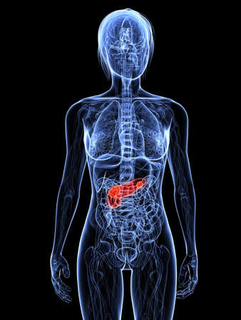 ransparent female body with highlighted pancreas Stock Photo - 7308795
