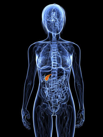 transparent female body with highlighted gallbladder photo
