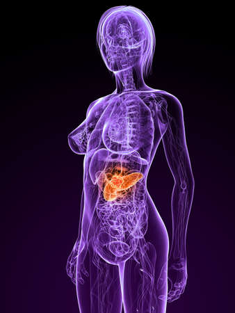 transparent female body with tumor in pancreas