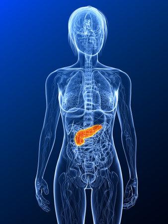 trzustka: Anatomia samice z podÅ›wietlonych trzustki Zdjęcie Seryjne