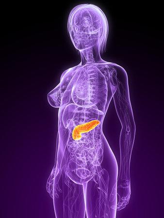 female anatomy with highlighted pancreas Stock Photo - 7314741