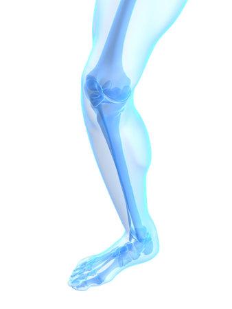 de rodillas: rodilla esquel�tica saludable