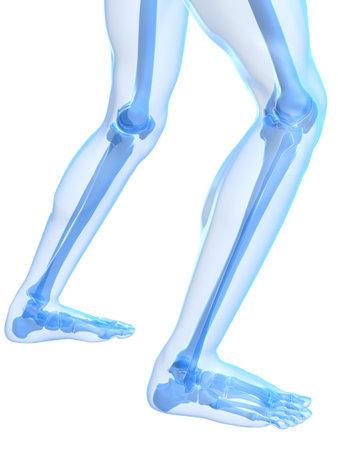 healthy skeletal knees photo
