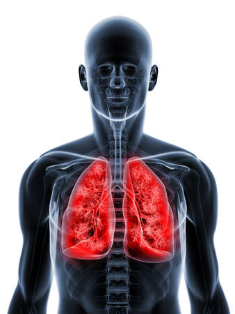 transparent body with highlighted lung