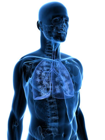 aparato respiratorio: cuerpo transparente con pulm�n detallada