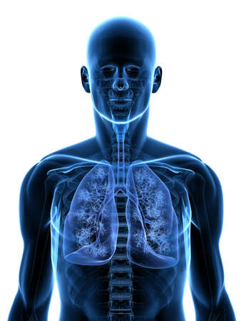 respiration:  transparent body with detailed lung