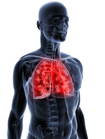 transparent body with highlighted lung Stock Photo