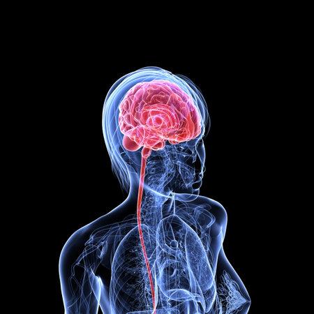 liver cancer: transparent female head with cerebral tumor