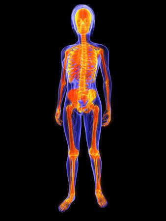 anatomy skeletal: glowing female skeleton