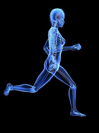 jogger: female jogger - x-ray