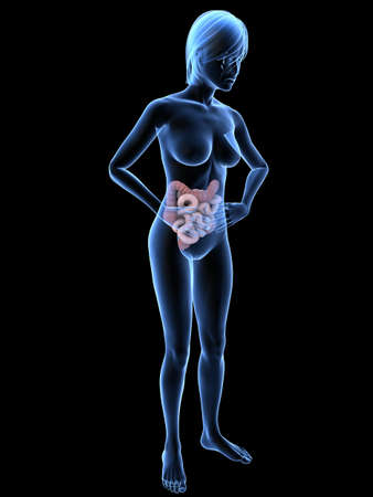 bellyache - female anatomy with highlighted colon Stock Photo - 7300126