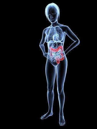organos internos: bellyache - anatom�a femenina con dos puntos resaltados  Foto de archivo