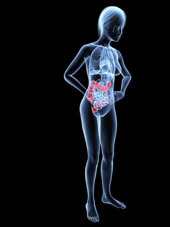bellyache: bellyache - female anatomy with highlighted colon