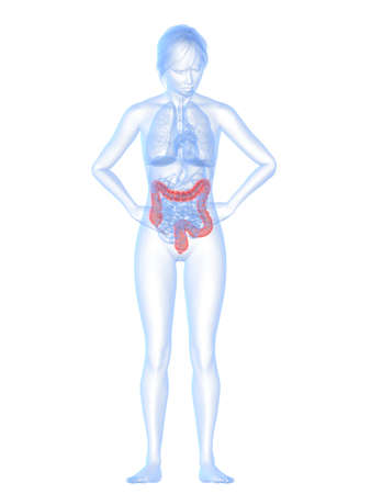 female body shape with highlighted colon photo