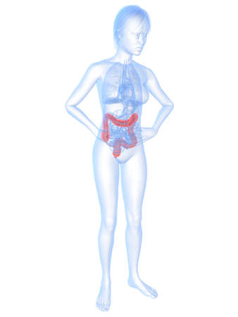 bellyache: female body shape with highlighted colon