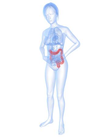 body shape: forma del corpo femminile con due punti evidenziati