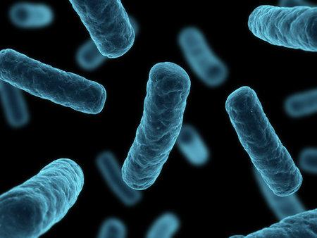 bacteria microscope: bacteria illustration