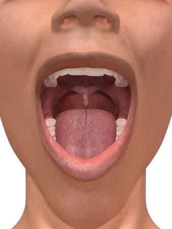 uvula: human mouth