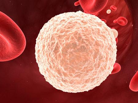 leukocyte: leucocytes in blood  Stock Photo