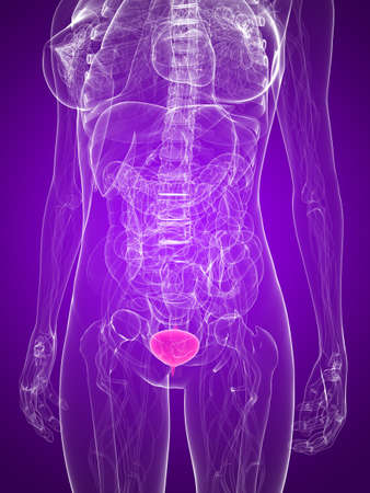 metastase: female anatomy with highlighted bladder Stock Photo