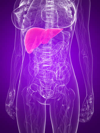 metastase: female anatomy with highlighted liver Stock Photo