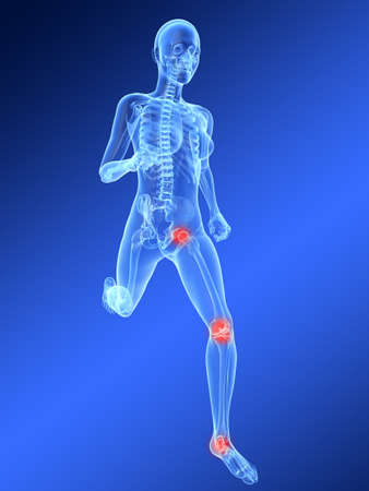running female skeleton with highlighted knee and hip joint photo