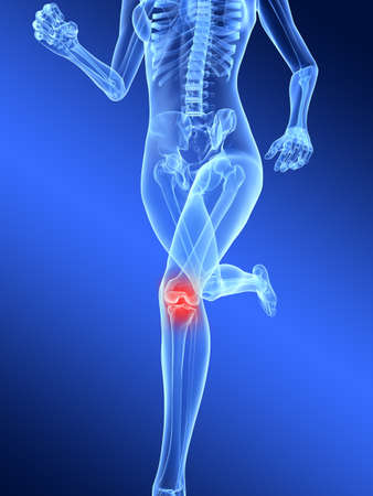 inflammation: running female skeleton with highlighted knee joint Stock Photo