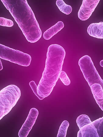 isolated bacteria photo