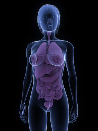 transparent female body with organs photo