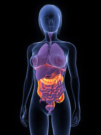colon cancer: transparent female body with highlighted colon