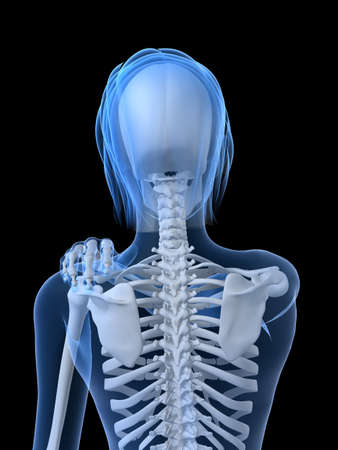 female skeleton with painful shoulder Stock Photo - 7250340