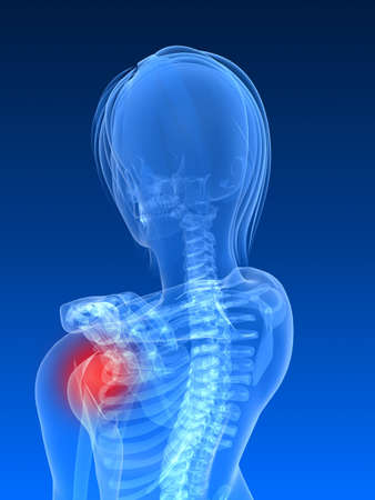 female skeleton with highlighted shoulder Stock Photo - 7250369