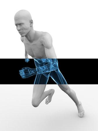 bone anatomy: 3d model - jogger - healthy spine