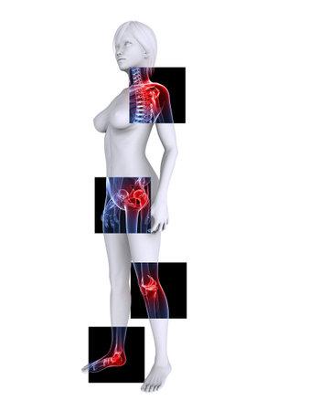 osteoporosis: x--ray femenina esqueleto - puso de relieve las articulaciones