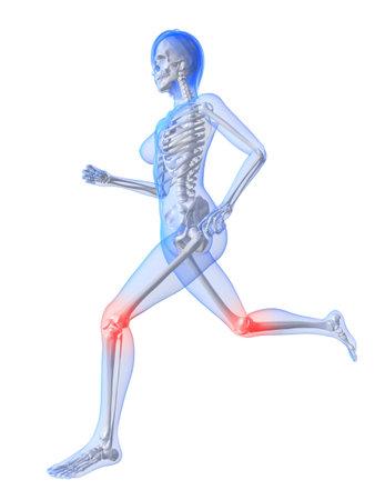 ejecutando el esqueleto femenino con las articulaciones de la rodilla resaltado  Foto de archivo - 7249215