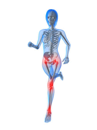 running female skeleton with highlighted joints photo
