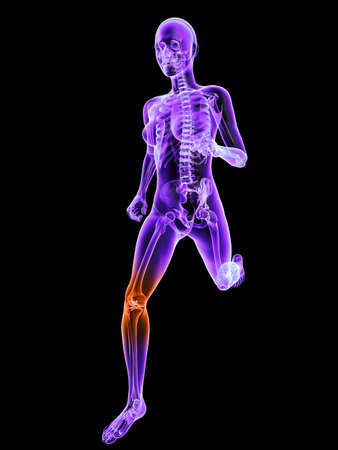 running female skeleton with highlighted joint Stock Photo - 7249233