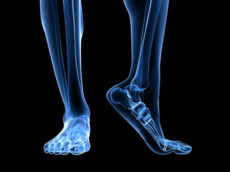 bone anatomy: x-ray foot illustration  Stock Photo